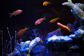 観賞魚・活魚の酸欠防止